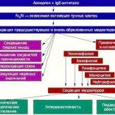 Алерген-специфічна імунотерапія - що це?