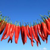 Чим корисний червоний перець?