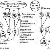 Ефективне відновлення сперматогенезу