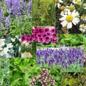 Які трави покращують пам'ять?