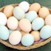Маски з яєчного білка