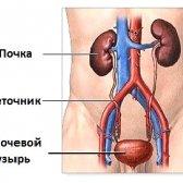 Нефроптоз: ступенів, симптоми, лікування нефроптоз