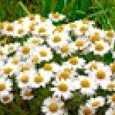 Рецепти настоїв з трав для зволоження шкіри обличчя