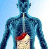 Варикозне Розширення вен стравоходу: коли порушеннях Кровообіг