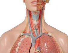 Атеросклероз позачерепніх відділів брахіоцефальніх артерій