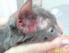 Атопічний дерматит у собак і кішок: лікування